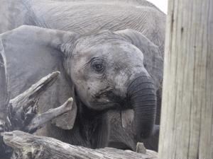 blog6_elephants2