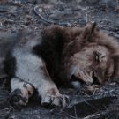 When the Lion is Not Asleep: Thoughts On Writing a Prequel