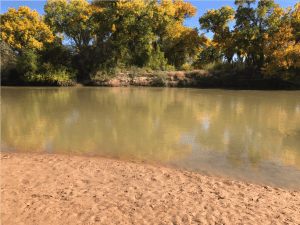 Fall on the bosque along the Rio Grande in New Mexico